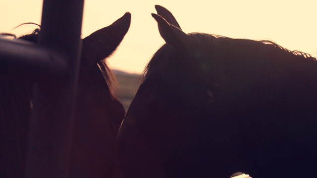 Signs of Sickness - How to read your horse's behavior