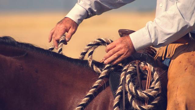 mb_horses_5