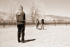 Lead your horse at a trot straight toward an observer.