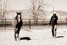 Work your horse on a lunge line at a trot. Have an observer stand so that she can see any lateral deviation of the legs or note if your horse is unweighting the inside foreleg.