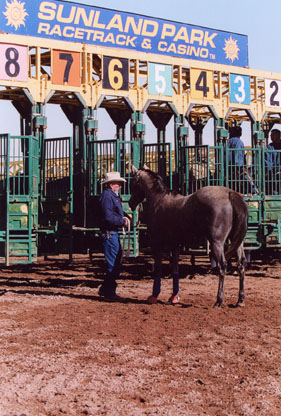 Standard operating procedure at starting gates often leads to aggravation for horse and handlers. For schooling days, Ray Hunt offers a different approach.