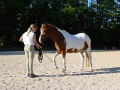"Kimberly gently picks up her pony's front foot, practicing her ""Puppet Horse"" moves."