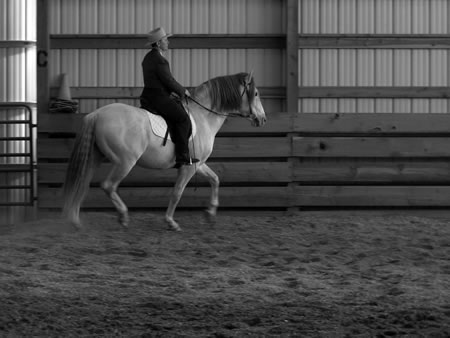 Alice riding Encantador in non-traditional English saddle. The versatility of the PRE is proving beneficial in many disciplines. Their ability to perform the High School maneuvers makes them particularly suited for Classical Dressage.