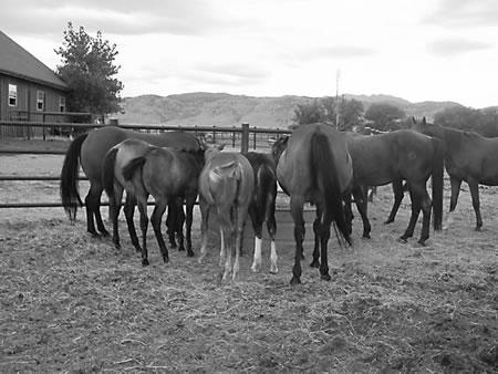 Herd-1