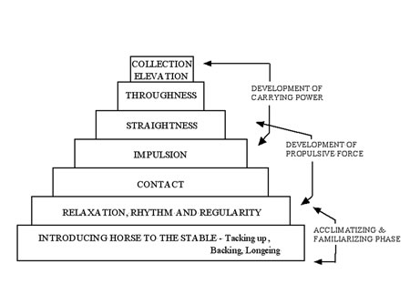 Figure 1: Common Seven Tiered Pyramid of Training