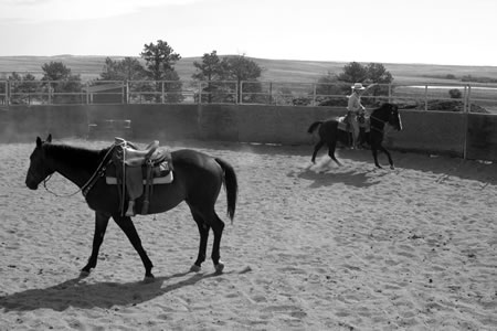 Once Randy was traveling freely to the right and left, I would take Shadow out on the big circle and leave Randy in the center of the round pen. Here, I'm working on Shadow's canter to the right.