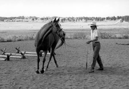 Nice picture; good amount of slack in the lead rope and he is bending around the circle, lined up from head to tail.