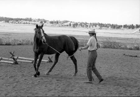 Ginsor is following the leading hand. See the slack in theThis colt is pushing away with his inside hind leg, leaving rope, but his head and neck are disconnected from his body.