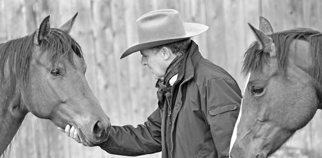 horsemanship essays archives eclectic horseman magazine first impressions