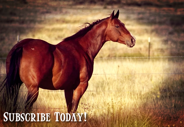 News + Special Offers | Eclectic Horseman Communications, Inc